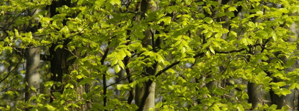 Das Grün des Stadtparks