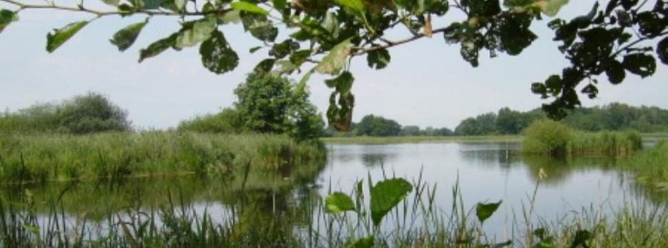 Von üppigem Grün gesäumter Teich im Naturschutzgebiet