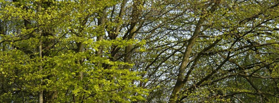 Dichte Bäume mit grünen Blättern